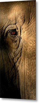 Eye Of The Elephant Metal Print by Greg and Chrystal Mimbs