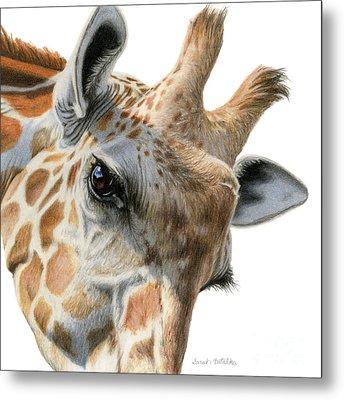 Eye Of The Giraffe Metal Print