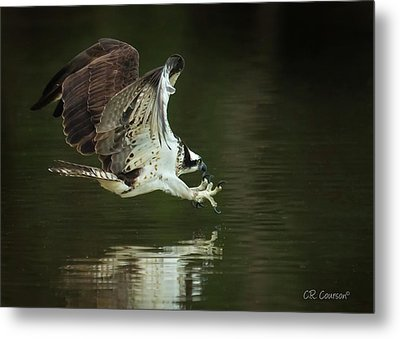Eye On The Prize Metal Print by CR Courson
