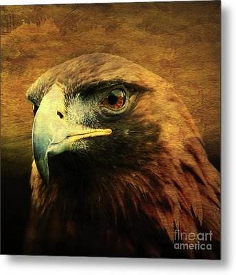 Eyes Of The Golden Hawk . Square Metal Print by Wingsdomain Art and Photography