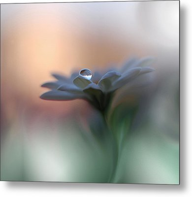 Eyes Of The Light Metal Print by Juliana Nan