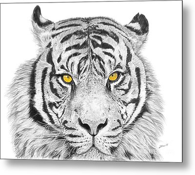Eyes Of The Tiger Metal Print by Shawn Stallings