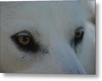 Eyes Of The Wolf - In Her Eyes Metal Print by Robyn Stacey