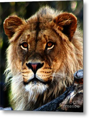 Eyes Of The Young King Metal Print by Nick Gustafson