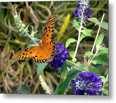 Metal Print featuring the photograph Eyes On A Butterfly by Sue Melvin
