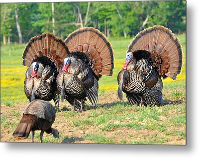 Eyes On The Prize Metal Print by Todd Hostetter