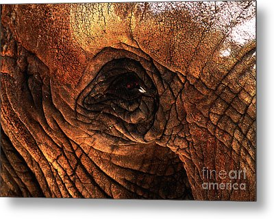 Eyes Through The Canyon Of Time Metal Print by Wingsdomain Art and Photography