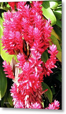 F10 Red Ginger Metal Print by Donald k Hall