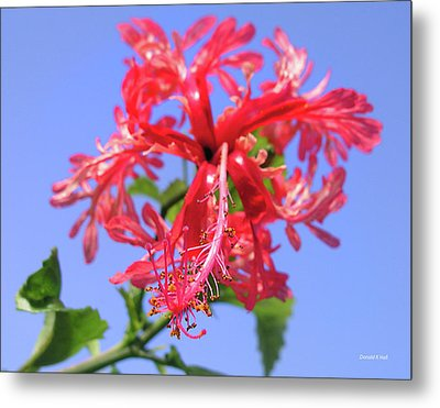 F18 Hawaiian Hibiscus Metal Print by Donald k Hall