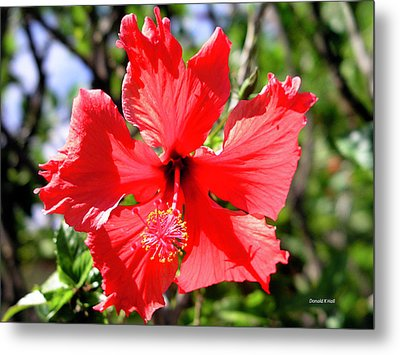 F20 Red Hibiscus Metal Print by Donald k Hall