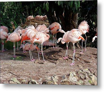 Fabulous Flamingos Metal Print
