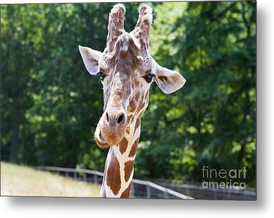 Face To Face  Metal Print by A New Focus Photography
