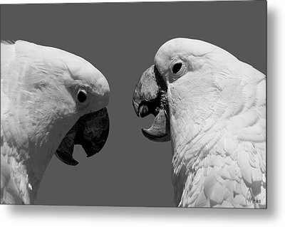 Metal Print featuring the photograph Face To Face Iv Bw by David Gordon