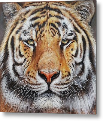 Metal Print featuring the drawing Faces Of The Wild - Amur Tiger by Elena Kolotusha