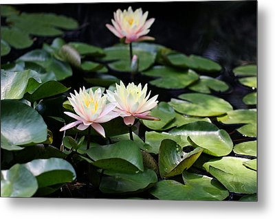 Fade To Pink Metal Print by Katherine White