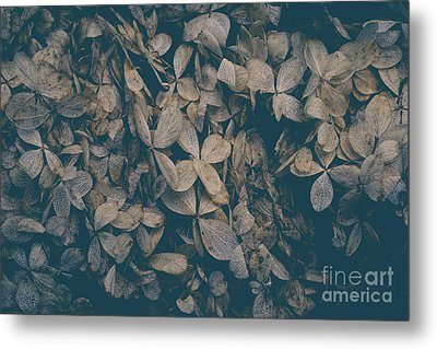 Metal Print featuring the photograph Faded Flowers by Edward Fielding