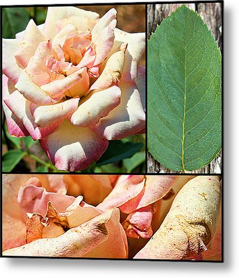 Metal Print featuring the photograph Fading Beauty Collage Print by KayeCee Spain