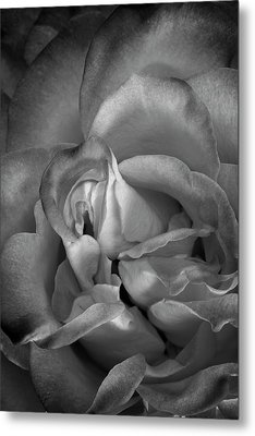 Metal Print featuring the photograph Fading Beauty by Mike Lang
