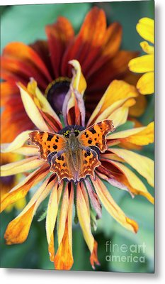Fading Summer Glory Metal Print by Tim Gainey
