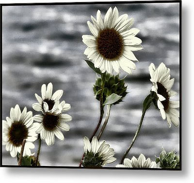Metal Print featuring the photograph Fading Sunflowers by Susan Kinney