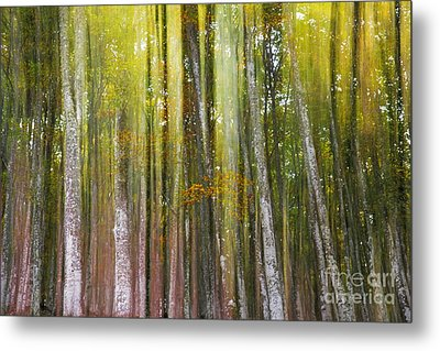 Fairy Forest I Metal Print