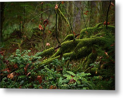 Fairy Forest Metal Print
