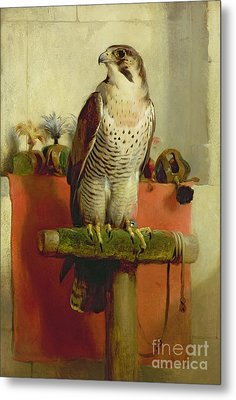 Falcon Metal Print by Sir Edwin Landseer