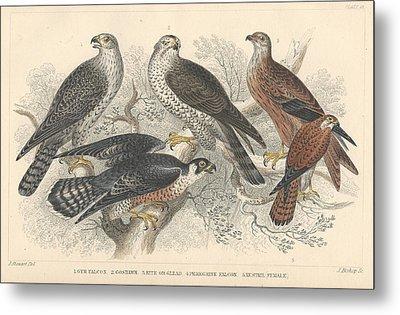 Falcons Metal Print by Anton Oreshkin