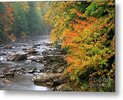 Fall Along The Cranberry River Metal Print by Thomas R Fletcher