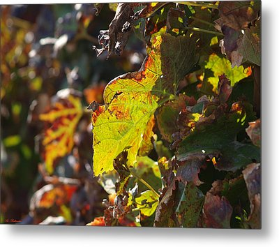 Metal Print featuring the photograph Fall Color 1 by Arik Baltinester