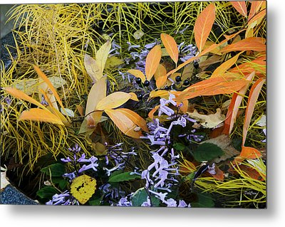 Metal Print featuring the photograph Fall Color Soup by Deborah  Crew-Johnson