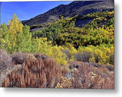 Fall Colors In Bishop Creek  Metal Print by Dung Ma