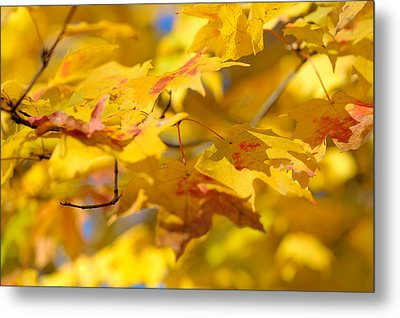 Fall Colors Metal Print by Sebastian Musial