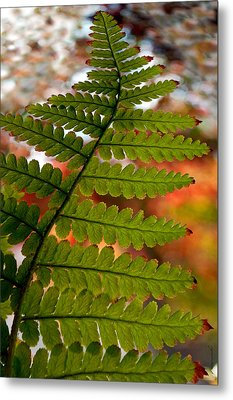 Metal Print featuring the photograph Fall Fern by Gwyn Newcombe