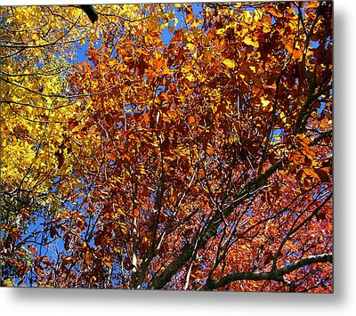 Fall Metal Print by Flavia Westerwelle