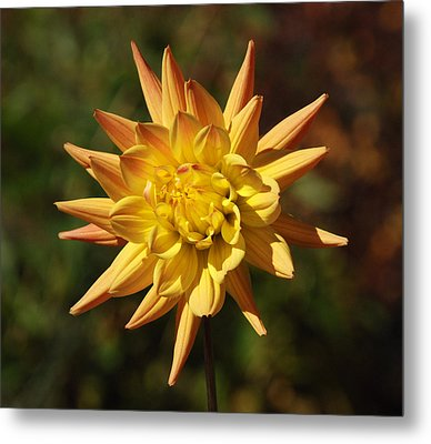 Metal Print featuring the photograph Fall Flower by Richard Bryce and Family