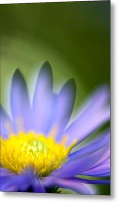 Fall Flower Metal Print by Silke Magino