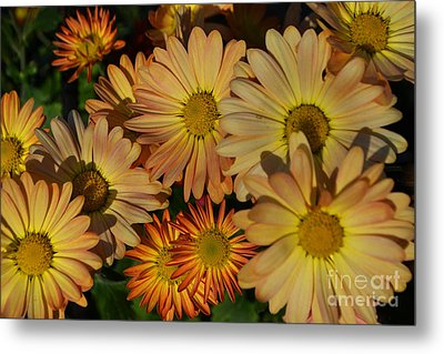 Fall Flowers In Madison  Metal Print by Amy Lucid