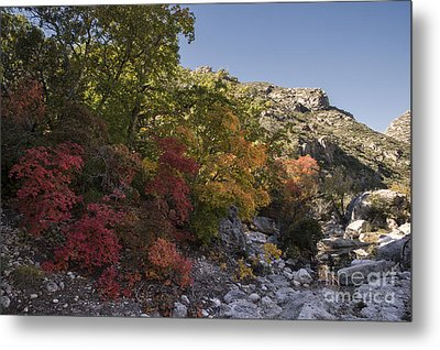 Metal Print featuring the photograph Fall Foliage In The Guadalupes by Melany Sarafis