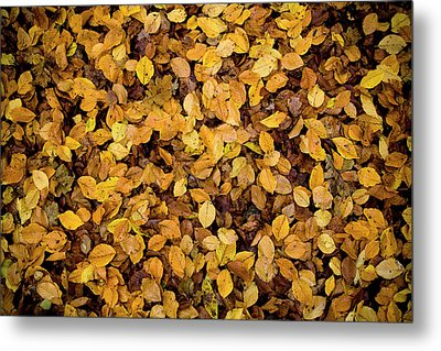 Fall Foliage Nature Pattern Metal Print