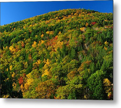 Fall Foliage Photography Metal Print by Juergen Roth