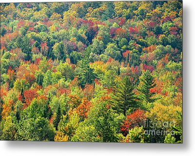 Fall Forest Metal Print by David Lee Thompson