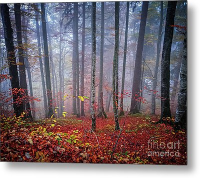 Metal Print featuring the photograph Fall Forest In Fog by Elena Elisseeva