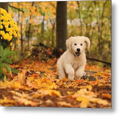Fall Frolic  Metal Print