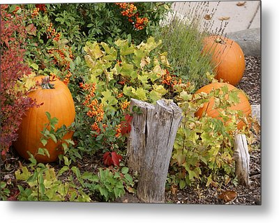 Fall Garden Metal Print by Cynthia Powell