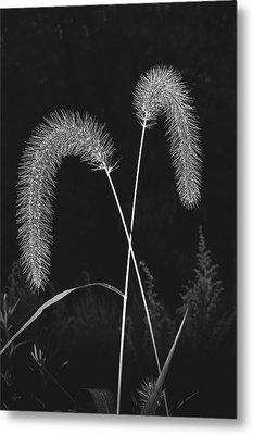 Fall Grass 2 Metal Print by Mark Fuller