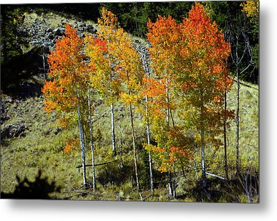 Fall In Colorado Metal Print by Marty Koch
