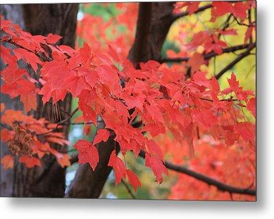 Fall In Red Metal Print by Shirin Shahram Badie