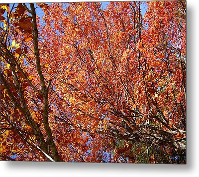 Fall In The Blue Ridge Mountains Metal Print by Flavia Westerwelle