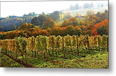 Fall In The Red Hills Of Dundee Metal Print by Margaret Hood